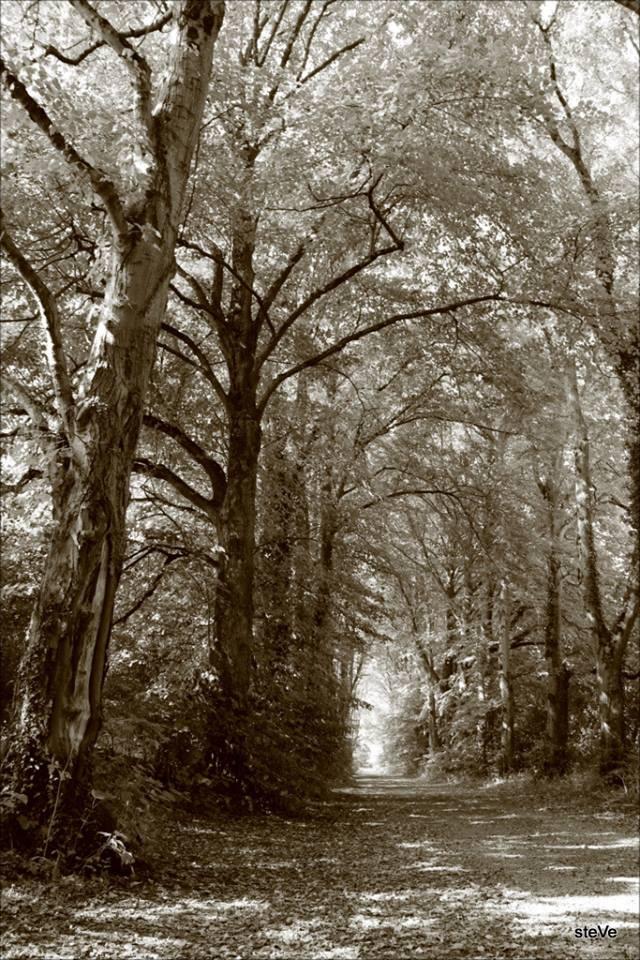 Donadea Forest, Clane, Co.Kildare.